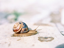 Snail Moving Across Stone Surf...