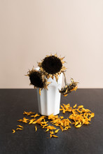 A Vase Of Dying And Wilted Sunflowers