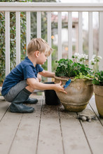 Little Boy Planting Flowers In...