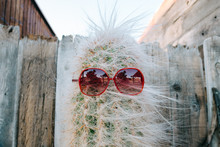Cactus With Sunglasses Against...