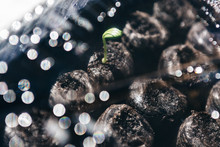 Cucumber Seedling And Abstract...