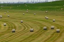 Bright Green Field Or Meadow W...