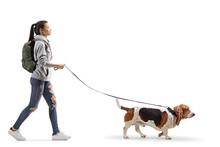 Female Student Walking A Basset Hound Dog