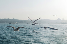 Boats Floating In Sea And Birds Above Water