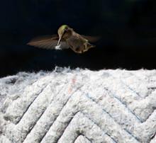 Hummingbird Getting Fiber From...