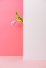 Pink Flower On A White And Pink Background