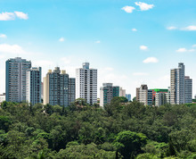 High Density Tall Buildings Surrounded By Trees. Eco City. Buildings Of The Central Region Of Sao Paulo SP Brazil Near To Acclimation Park.