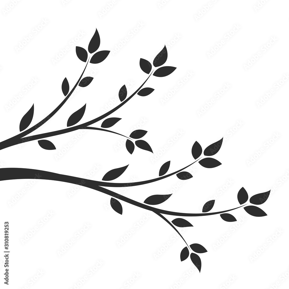 Fototapeta Silhouette of a branch with leaves. Young flowering tree. Sapling.
