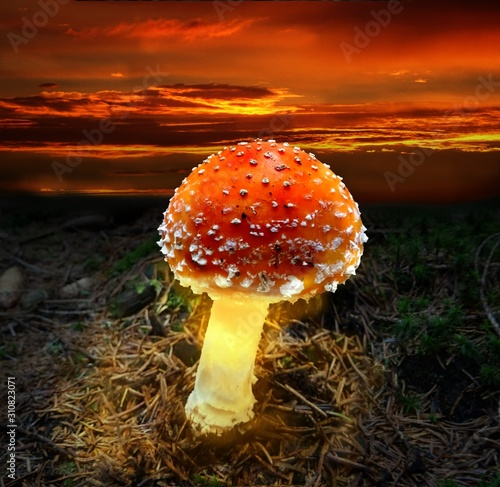 Photo Glowing amanita at a sunset