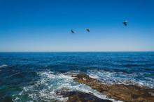 Pelicans Flying Over The Ocean