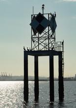 Duwamish Head Navigation Marker In Elliott Bay Seattle With Resting Cormorants