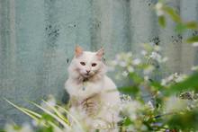 Chat Blanc Posant Devant Une Vitre Peinte