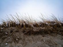Tall Grass Atop An Eroded Dune...