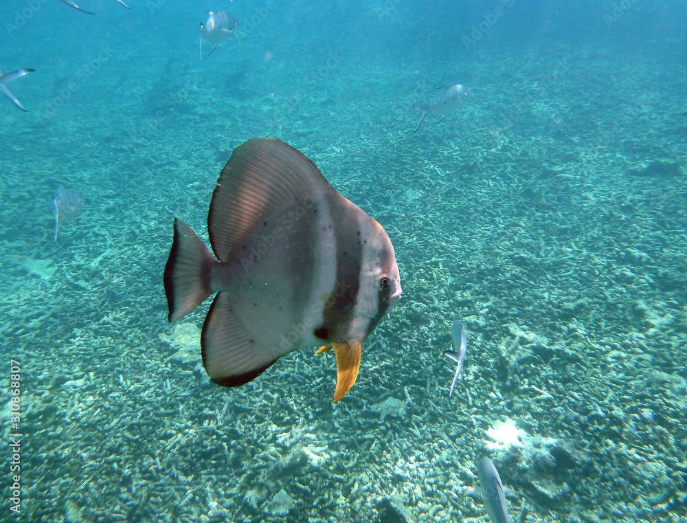 Fototapeta ryba