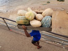 Heavy Work, Load Carrier Transports Many Kg Of Pumpkins In A Box On The Head. Transport Takes Place From Boat Delivery To The Vegetable Market In Manaus. Amazon, Brazil