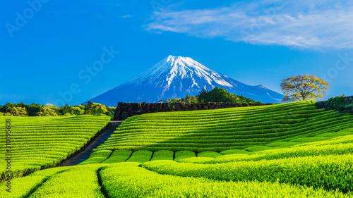 Obraz na plátně 富士山と茶畑と青い空