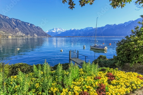 Stampa su Tela Colorful springtime flowers at Geneva lake and Alps mountains in