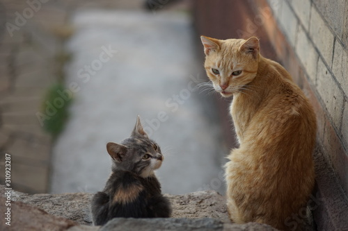 Photo Cats family spend time together, ginger cat father and ashy kitten daughter, rest in the yard, cute pets