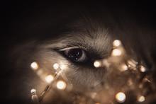 Close Up Portrait Of Blue Eye ...