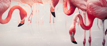 Flamingos. Design Element, Cre...