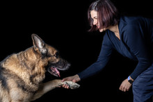 German Shepherd Gives Paw To A...