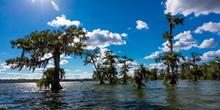 APRIL 25, 2019, BREAUX BRIDGE, LOUISIANA, USA - Lake Martin Swamp In Spring Near Breaux Bridge, Louisiana - Shot From Boat