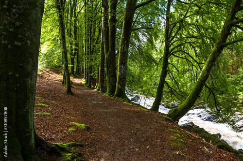 Fotografie, Obraz Walking in Blair Atholl, Scotland