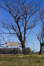 Arbol Buchanan