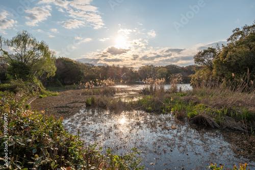 Valokuva  湿原に沈む夕日