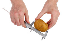 Farmer Checks The Size And Quality Of  Potato Vegetable Bulb  Using A Steel Caliperr  Isolated Macro