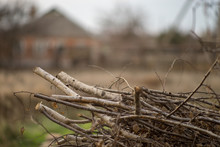 Pile Dry Sawn Birch Branches I...