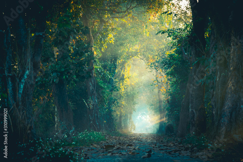 Canvas Print The beam of light in the path of the magic forest