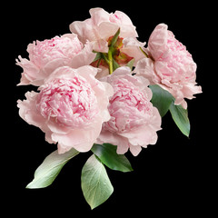 Fototapeta Kwiaty Floral arrangement, bouquet of garden flowers. Pink peonies isolated on black background.