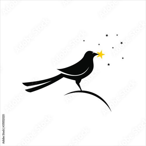 standing magpie bird picking stars Fototapeta