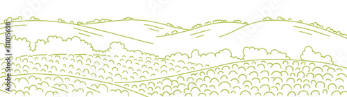 Fototapeta Field landscape. Growing vegetables agricultural garden farming. Rural countryside landscape. Vector hand-drawn sketch line drawing. obraz