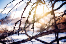 Raggi Di Pallido Sole Invernal...
