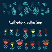 Native Australian Flowers And Leaves, Hand Drawn Decorative Elements On Dark Background