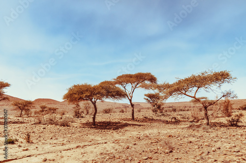 View on the moroccan desert, drying of dry river and desertification Fototapeta