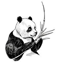 Panda Bear Eating A Bamboo. In...