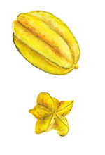 Watercolor Image Of Star Fruit