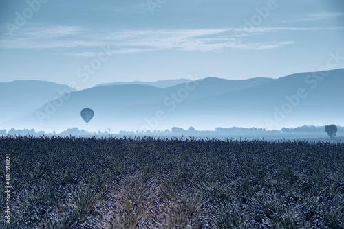 Fototapeta premium Lavender 62