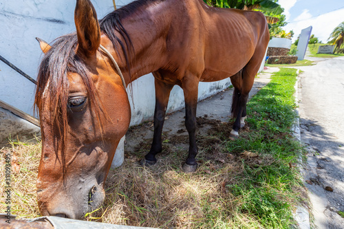 Photo  Horse eating Hay in the streets of a small Cuban Town during a vibrant sunny day