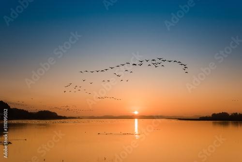 朝焼けの宮城伊豆沼渡り鳥の朝の飛び立ち Slika na platnu