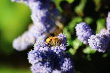 Happy Bees Lilac Sage Purple Flow
