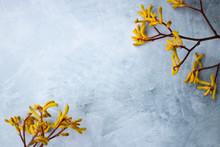 Yellow Flowers Kangaroo Legs O...