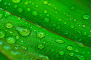 Background texture, Close up of drop on leaf nature background.