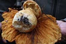 Mushrooms In Mclaren Park, San Francisco, Calfornia