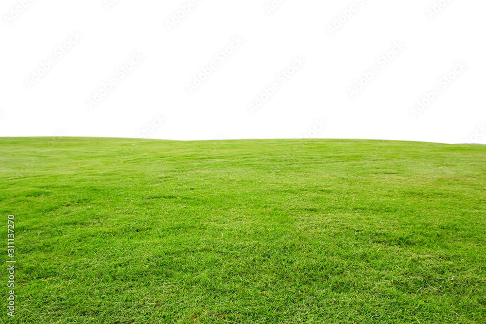 Fototapeta fresh green grass lawn isolated on white background