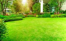 Fresh Green Burmuda Grass Smoo...