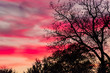canvas print picture Coral Sunset